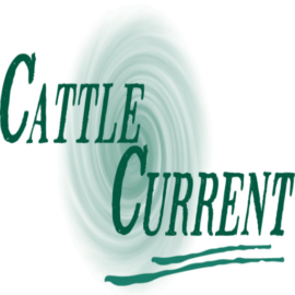 Daily Market Highlights – Cattle Current Market Update